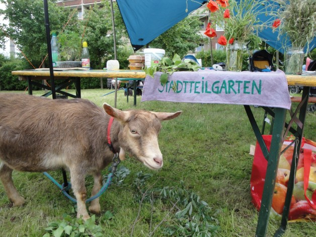 Jena Winzerla hat einen Stadtteilgarten